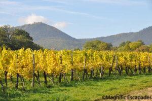 vignes-oenotourisme-alsace